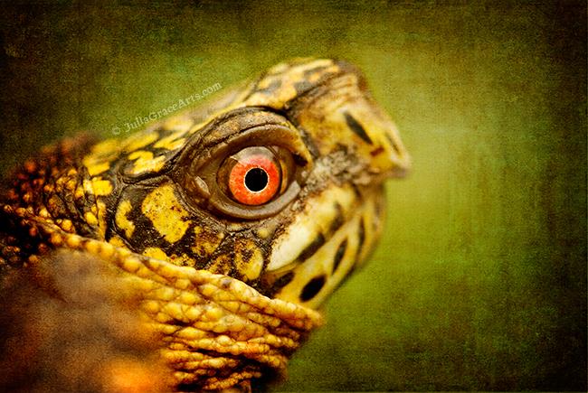 Macro photograph of eastern box turtle face