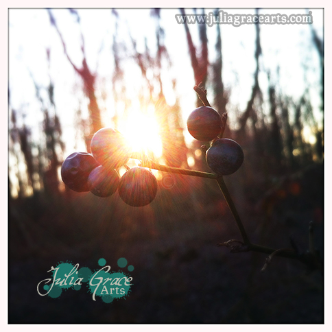 A sprig of indigo-colored wild berries backlit by the winter sun