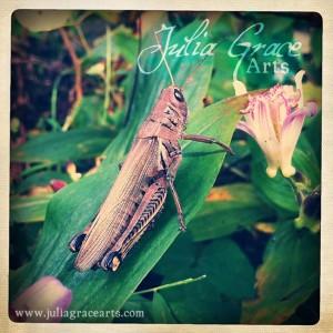 Large Grasshopper iPhone Photo