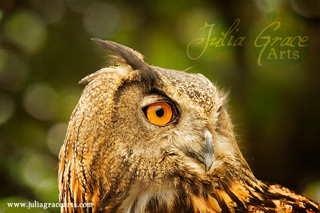 Close up portrait of an eagle owl