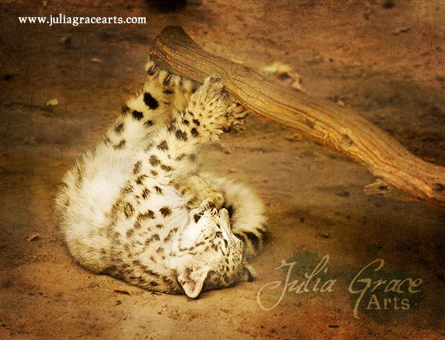 A snow leopard cub
