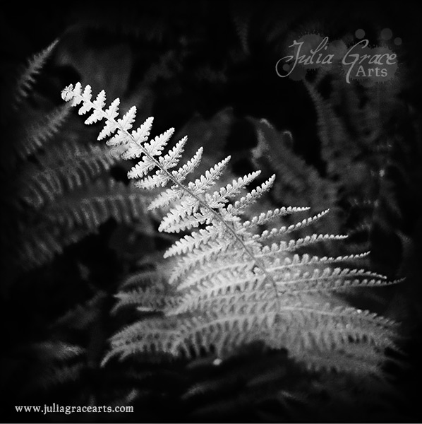 A black and white Hipstamatic photograph of a fern growing up from the forest floor