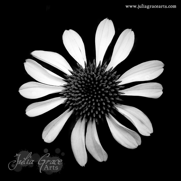 A black and white Hipstamatic photograph of a cone flower